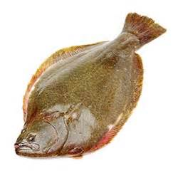 Turbot definition and meaning | Collins English Dictionary