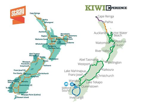What is the Difference Between Stray and Kiwi Experience