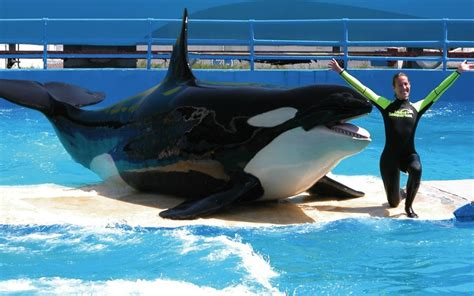 Free entry at Miami Seaquarium for veterans, military and