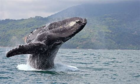 Costa Rican Wildlife to Watch For | Costa Rica Experts