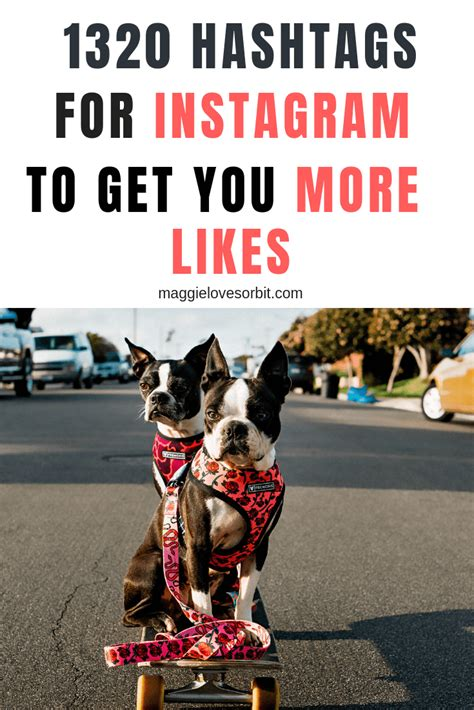 2019 Dog Hashtags for Instagram • 1320 Epic Hashtags to