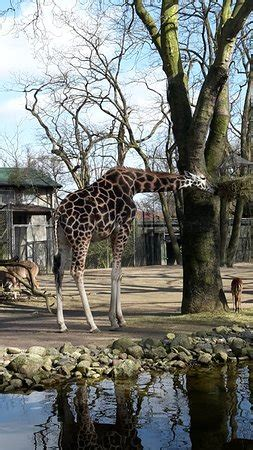Hamburg Zoo - 2018 All You Need to Know Before You Go