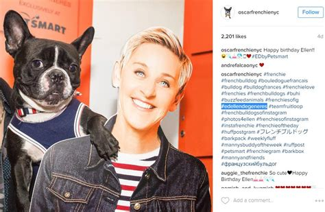 A list of Dog Hashtags to help you get more likes and