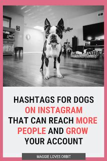 363 Instagram Dog Hashtags - hashtags updated monthly